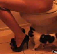 The pooping girl in high heel and her cat